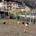 Galline ruspanti a Riva San Vitale.