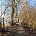 Seehag (Auenwald auf dem Strandwall): schöner Weg
