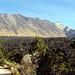 Auf der Strasse im National Park. Pico de Fraile ist die Pyramide auf der rechten Seite. Wir schauen auf den äußeren Kraterand, der Anstieg erfolgt von der Kraterseite.