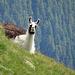 Tierbeobachtung (Foto von [u Stijn], Ausschnittvergrösserung)