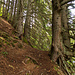 Zu Beginn geht es durch Wald hoch
