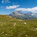 Flaches Gelände oberhalb vom Bristensee