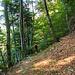 Nach einem langen Abstieg durch Wald rückt das Dorf Bristen nun schon bald in die Nähe