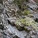 Felswände im Klammbachtal