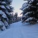 auf dem Stelserberg bin ich auf eine mit Schnee zugedeckte Skispur gestossen.