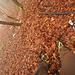Auf Erkundung in abwegigem Gelände.<br /><br />Dank zuschaltbarer Traktion immer mit bombensicherem Halt.<br /><br />Da die Körbchen der Kahtoola-Steigeisen zu klein waren für die Winterstiefel, das Gehen mit dem starren Steg der Grivel aber höchst unangenehm ist, hab ich ein wenig rumprobiert und den Federstahlsteg der Kahtoola in die Grivel-Eisen montiert. Perfekt.