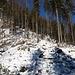 Vom Reitweg geht es nun auf diesem Hang weglos nach Westen den breiten Ostgrat des Höhenzugs (1185 m) hinauf. Ich freue mich schon auf die erste Erhebung, seine östliche Gipfellichtung (etwa 1150 m). 200 leichte Hm Anstieg sind es bis dort hinauf.