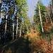 Kurz nach der Gelämdekuppe P.778m verlies ich den Forstweg und wanderte nun deutlich steiler einen kleinen Weg hinaufzum Waldrand der Weide Langholz (P.840m).