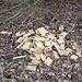 Kohlendioxid eingespart: Holzabfälle in den Wald geschmissen (Jetzt die schlechte Nachricht: Auch die Verrottung setzt Kohlendioxid frei!)