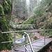 In der Klamm des Gottschlägbaches. Vorsicht, rutschige Holzbohlen auf den Brücken bei dem heutigen nassen Wetter.