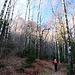 Durch lichten Birkenwald