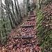 herbstlich gefärbter Waldabstieg