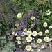 wo sich entlang der Hauptstrasse diverse schöne Blumen finden