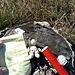 Cache n.3<br />(Il pupazzetto è un Trackable ossia un gingillo che i geocacher fanno girare per il mondo; questo si chiama Fred, viene dall'Ohio, USA e ha già percorso 69403.9 km ad oggi)