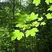 Viel Wald gibt es auf dieser Wanderung zu betrachten.