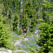 Hiking Bear Creek Mountain
