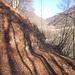 Tantissime foglie sul sentiero.