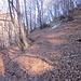 Sentiero Erbonne - Alpe Orimento: a tratti con tantissime foglie.
