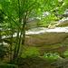 Kräftiges Klettergebiet in der Schlucht