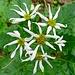 Blumenpracht im Südbuchenwald