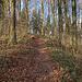 der Weg führt durch lichten Wald...zumindest jetzt im Januar