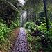 Das erste Stück bis zu der Savane à Mulets (1150m) ist als botanisch interessanter Spazierweg ausgebaut. Gar kein Vergleich zur schlammigen Wildnis auf Dominica.
