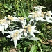 Auftakt zum üppigen Blumenreigen - grad mit edelsten Weissen