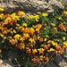 ... bunten Blüten ...