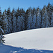 An den Tannen kann man gut erahnen, wie das Wetter letzte Woche in den Bergen getan hat.