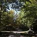Im Aufstieg zum Monte Gorzano - Die Piste führt durch offenes Gelände, zwischendurch aber auch durch Waldstücke.
