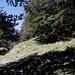 """Im Aufstieg zum Monte Gorzano - Auf gut 1.680 m geht's mal wieder durch ein Waldstück, und die Piste schwenkt """"nach rechts"""". Zuvor verlassen wir aber den Weg und steigen durch den Wald steil nach oben..."""