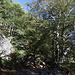 Im Abstieg vom Monte Gorzano - Hier geht's etwa höhehaltend durch ein Waldstück.