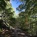 Im Abstieg vom Monte Gorzano - Mittlerweile zieht der Weg wieder als fahrbare Piste ohne größere Neigung durch das Gelände.