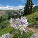 Frühling - mit Columbine - an den Geissler Peaks