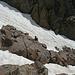 Das steilt sich nach oben hin etwas auf. Mangels Eispick und Crampons also ab in die Felsen.