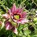 Wunder der Natur - siehe auch [http://f.hikr.org/files/2844479.jpg Vergrösserung]