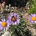 letzter heutiger Blumengruss (auch mit Besucher)