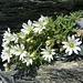 schmucke Blumen am Pass 2