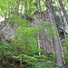 Jurafelsen mit frischem Frühlingsgrün