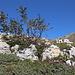 Im Aufstieg zwischen Vado di Siella und Monte Siella - Vorbei an einer rot-gelben Farbmarkierung, wir befinden uns also offenbar auf der richtigen Route.