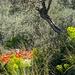 Pilion im Frühling