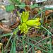 Flora im März auf Pilion