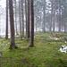 Moos und Nebel am See