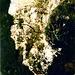 Die Via ferrata Rio Secco ist ein kleiner, versteckter und deshalb wenig bekannter Klettersteig durch eine wilde Klamm
