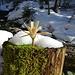 Geschnitzte Holzblume am Weg im Sagenraintobel
