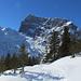 Jungtannen im unteren Teil der Schneeschuhwanderung.