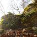 kleine Kraxelstelle vor der Ruine Alt Homberg