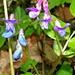 Unzählige dieser prachtvollen Blumen säumten den Aufstiegsweg