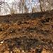 Lo spesso strato di foglie che l'incendio ha carbonizzato ha lasciato una coltre nera sul terreno.