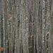 Vexierbild.  Lange draufstarren, bis man vor lauter Bäumen den Wald nicht mehr sieht.